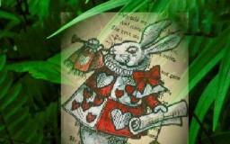 A la poursuite du lapin blanc